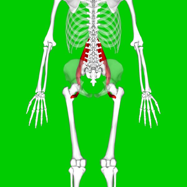 ニーレイズのやり方や効果を紹介!腹筋下部と腸腰筋を鍛える!